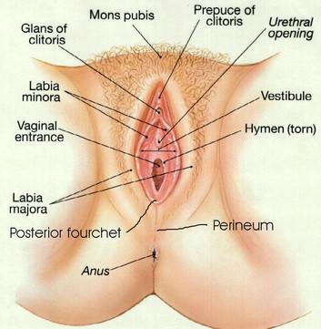 Vagina - Anatomy/Physiology